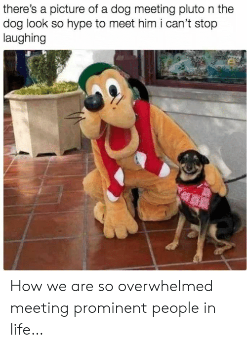 Hype, Life, and Pluto: there's a picture of a dog meeting pluto n the  dog look so hype to meet him i can't stop  laughing How we are so overwhelmed meeting prominent people in life…