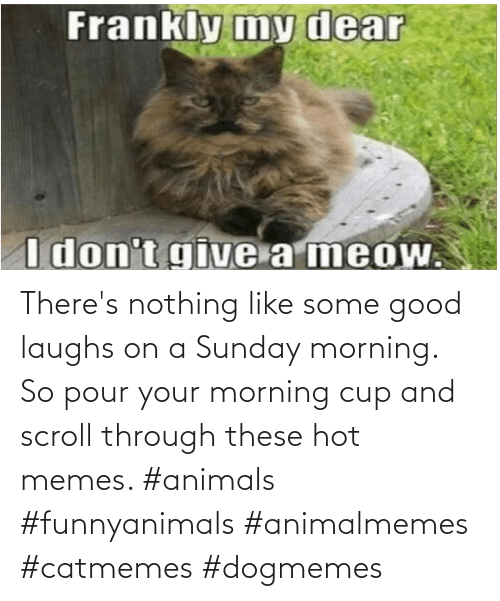 hot: There's nothing like some good laughs on a Sunday morning.  So pour your morning cup and scroll through these hot memes. #animals #funnyanimals #animalmemes #catmemes #dogmemes