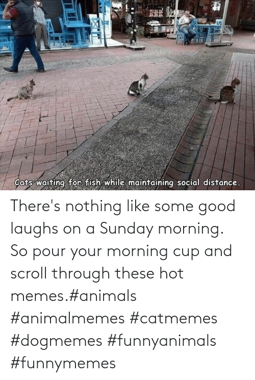 Animals: There's nothing like some good laughs on a Sunday morning.  So pour your morning cup and scroll through these hot memes.#animals #animalmemes #catmemes #dogmemes #funnyanimals #funnymemes