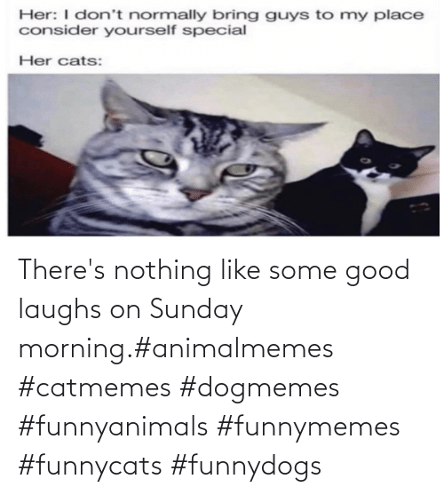 Good: There's nothing like some good laughs on Sunday morning.#animalmemes #catmemes #dogmemes #funnyanimals #funnymemes #funnycats #funnydogs