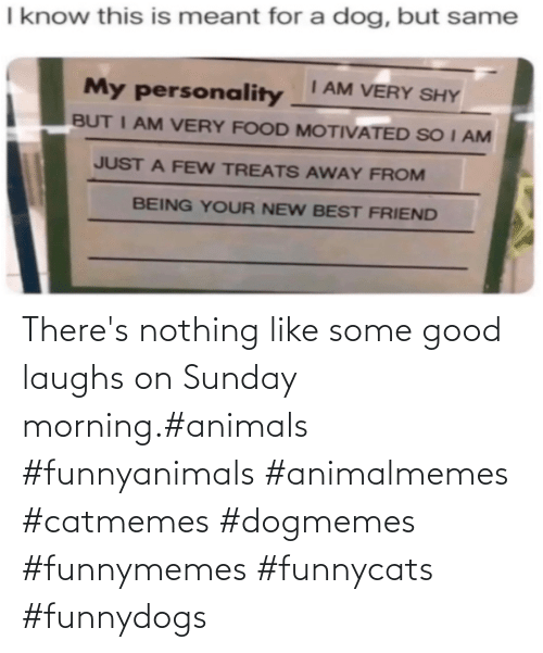 morning: There's nothing like some good laughs on Sunday morning.#animals #funnyanimals #animalmemes #catmemes #dogmemes #funnymemes #funnycats #funnydogs