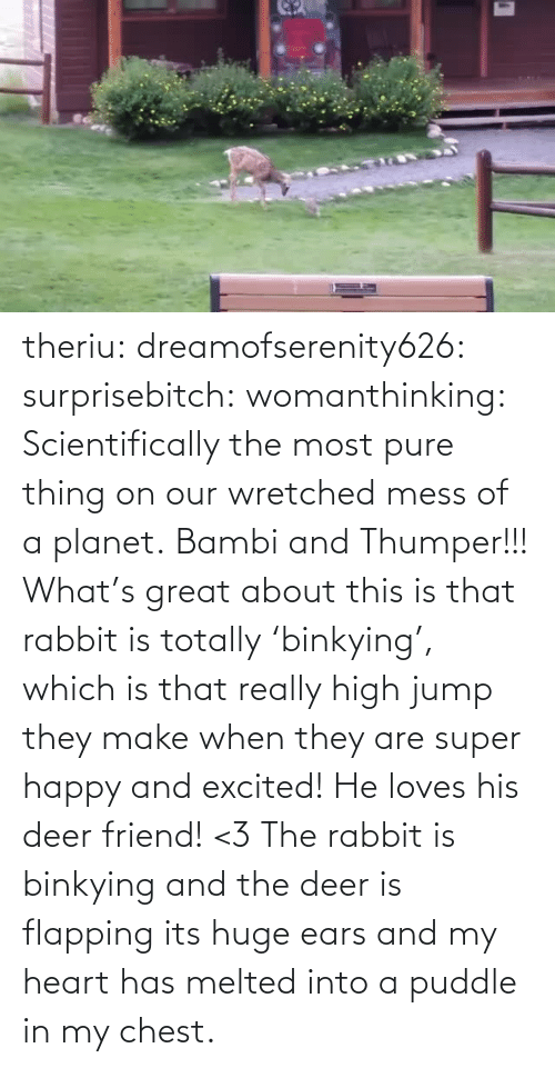 excited: theriu: dreamofserenity626:  surprisebitch:  womanthinking:  Scientifically the most pure thing on our wretched mess of a planet.  Bambi and Thumper!!!  What's great about this is that rabbit is totally 'binkying', which is that really high jump they make when they are super happy and excited! He loves his deer friend! <3  The rabbit is binkying and the deer is flapping its huge ears and my heart has melted into a puddle in my chest.