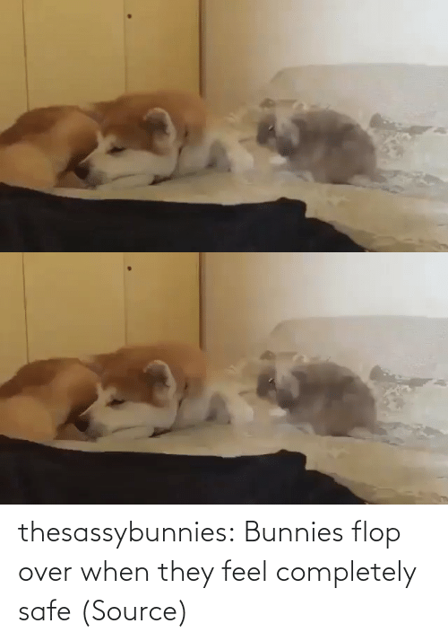 safe: thesassybunnies:  Bunnies flop over when they feel completely safe (Source)
