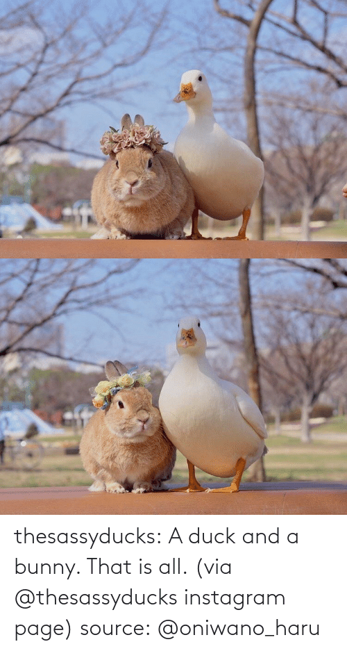 page: thesassyducks: A duck and a bunny. That is all. (via @thesassyducks instagram page) source: @oniwano_haru