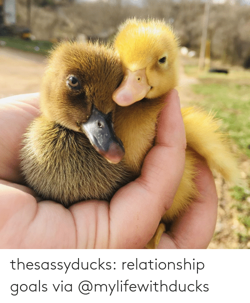 goals: thesassyducks: relationship goals via @mylifewithducks