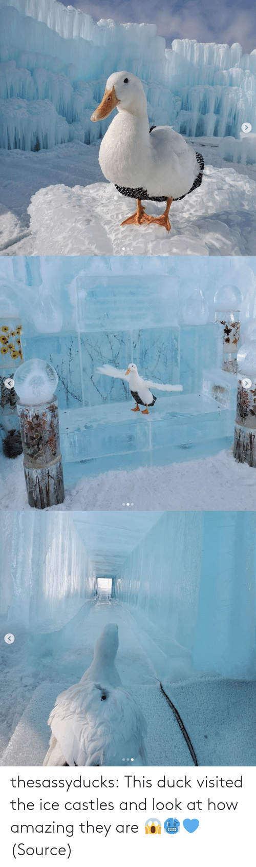 ice: thesassyducks: This duck visited the ice castles and look at how amazing they are 😱🥶💙 (Source)