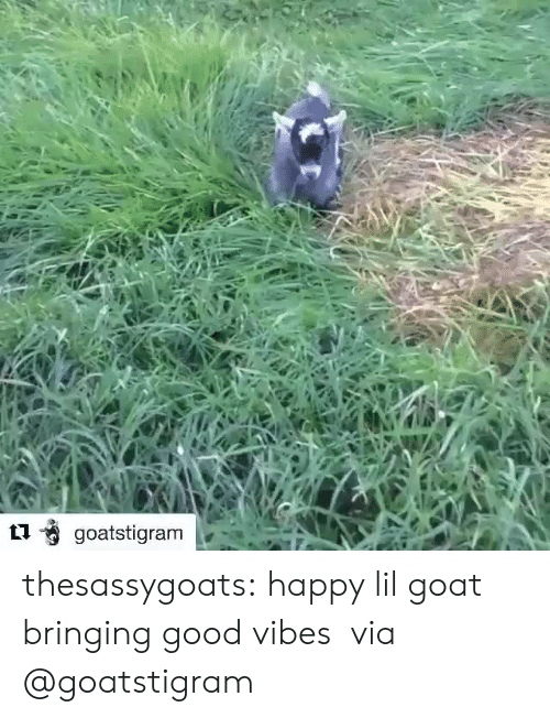 Target, Tumblr, and Goat: thesassygoats: happy lil goat bringing good vibes  via @goatstigram