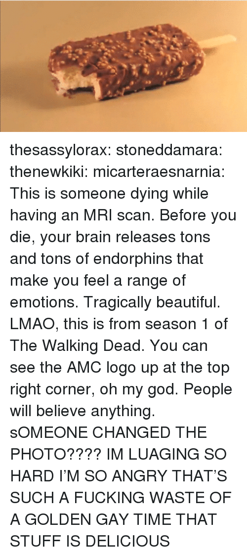 Beautiful, Fucking, and God: thesassylorax:  stoneddamara:  thenewkiki:  micarteraesnarnia:  This is someone dying while having an MRI scan. Before you die, your brain releases tons and tons of endorphins that make you feel a range of emotions. Tragically beautiful.  LMAO, this is from season 1 of The Walking Dead. You can see the AMC logo up at the top right corner, oh my god. People will believe anything.  sOMEONE CHANGED THE PHOTO???? IM LUAGING SO HARD  I'M SO ANGRY THAT'S SUCH A FUCKING WASTE OF A GOLDEN GAY TIME THAT STUFF IS DELICIOUS