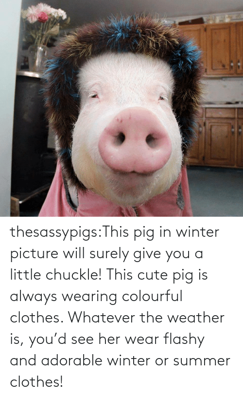 her: thesassypigs:This pig in winter picture will surely give you a little chuckle! This cute pig is always wearing colourful clothes. Whatever the weather is, you'd see her wear flashy and adorable winter or summer clothes!