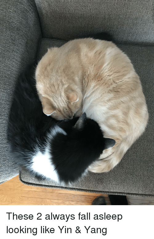 Fall, Best, and Boys: These 2 always fall asleep looking like Yin & Yang