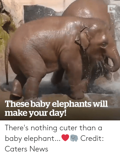 Baby Elephant: These baby elephants will  make your day! There's nothing cuter than a baby elephant…❤️🐘  Credit: Caters News