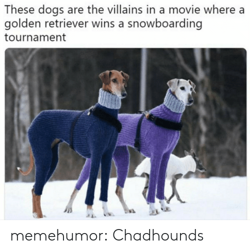 retriever: These dogs are the villains in a movie where a  golden retriever wins a snowboarding  tournament memehumor:  Chadhounds