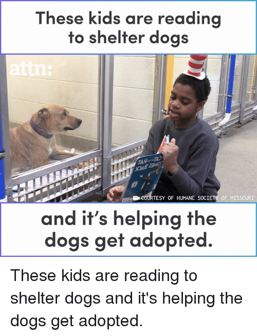 Humane Society: These kids are re  ading  to shelter dogs  TESY OF HUMANE SOCIETY OF MISSOURI  and it's helping the  dogs get adopted. These kids are reading to shelter dogs and it's helping the dogs get adopted.