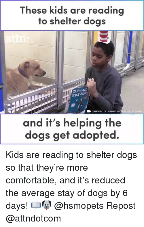 Comfortable, Dogs, and Memes: These kids are reading  to shelter dogs  AHT  23MO  COURTESY OF HUMANE  ETY OF MISSOURI  and it's helping the  dogs get adopted Kids are reading to shelter dogs so that they're more comfortable, and it's reduced the average stay of dogs by 6 days! 📖🐶 @hsmopets Repost @attndotcom