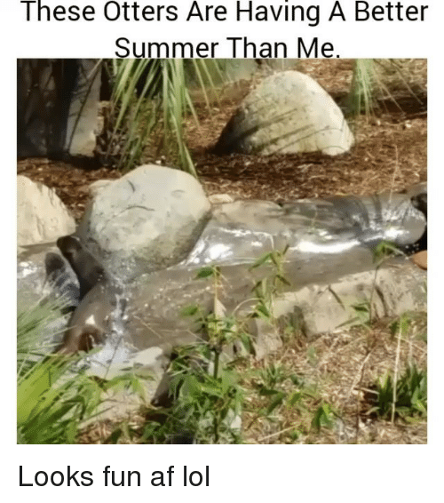 Looks Fun: These Otters Are Having A Better  Summer Than Me Looks fun af lol