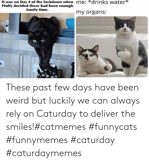 Past: These past few days have been weird but luckily we can always rely on Caturday to deliver the smiles!#catmemes #funnycats #funnymemes #caturday #caturdaymemes