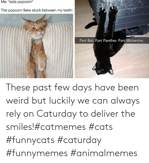 Past: These past few days have been weird but luckily we can always rely on Caturday to deliver the smiles!#catmemes #cats #funnycats #caturday #funnymemes #animalmemes