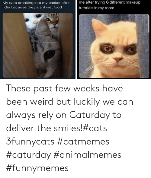 Few: These past few weeks have been weird but luckily we can always rely on Caturday to deliver the smiles!#cats 3funnycats #catmemes #caturday #animalmemes #funnymemes