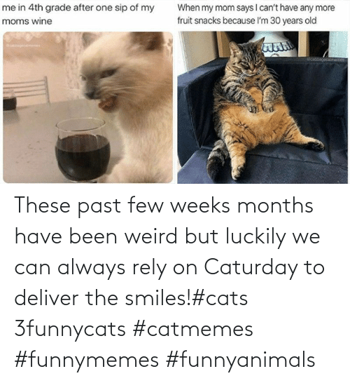 Smiles: These past few weeks months have been weird but luckily we can always rely on Caturday to deliver the smiles!#cats 3funnycats #catmemes #funnymemes #funnyanimals
