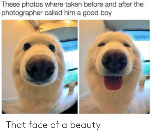 photos: These photos where taken before and after the  photographer called him a good boy That face of a beauty