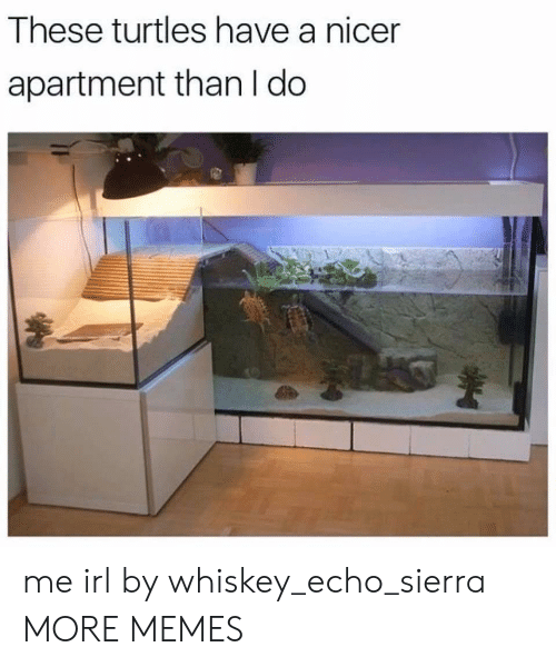 Dank, Memes, and Target: These turtles have a nicer  apartment than I do me irl by whiskey_echo_sierra MORE MEMES