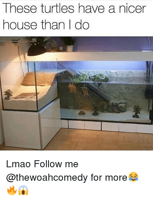 Turtling: These turtles have a nicer  house than I do Lmao Follow me @thewoahcomedy for more😂🔥😱