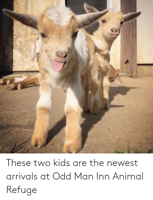 Two Kids: These two kids are the newest arrivals at Odd Man Inn Animal Refuge
