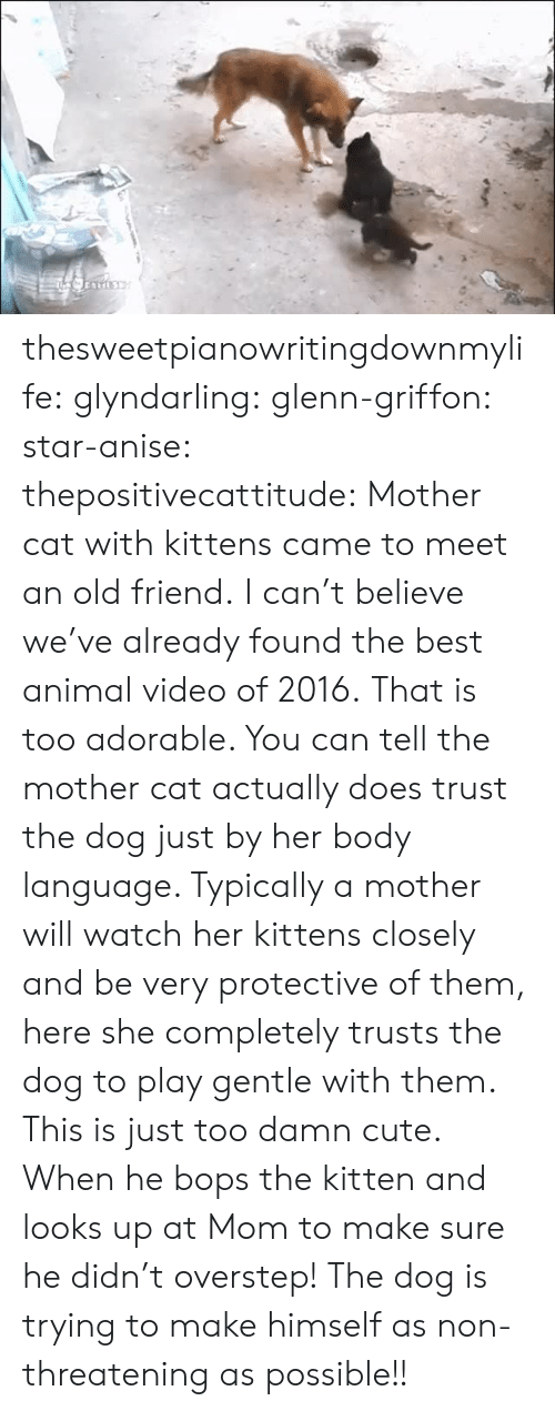 Kittens: thesweetpianowritingdownmylife:  glyndarling:  glenn-griffon:  star-anise:  thepositivecattitude:  Mother cat with kittens came to meet an old friend.  I can't believe we've already found the best animal video of 2016.  That is too adorable. You can tell the mother cat actually does trust the dog just by her body language. Typically a mother will watch her kittens closely and be very protective of them, here she completely trusts the dog to play gentle with them. This is just too damn cute.  When he bops the kitten and looks up at Mom to make sure he didn't overstep!  The dog is trying to make himself as non-threatening as possible!!