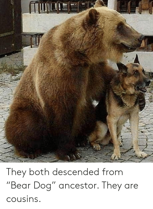 """cousins: They both descended from """"Bear Dog"""" ancestor. They are cousins."""