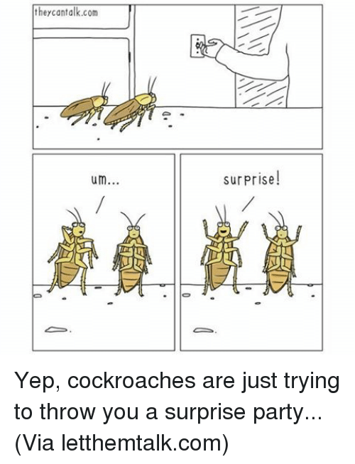 Throwes: they cantalk.com  um  As  surprise!  AADLU Yep, cockroaches are just trying to throw you a surprise party... (Via letthemtalk.com)