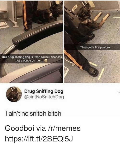 No Snitch: They gotta fire you bro  This drug sniffing dog is trash cause I deadass  got a ounce on me rn  Drug Sniffing Dog  @aintNoSnitchDog  ain't no snitch bitch Goodboi via /r/memes https://ift.tt/2SEQi5J