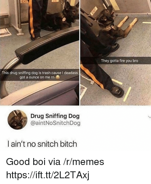 No Snitch: They gotta fire you bro  This drug sniffing dog is trash cause I deadass  got a ounce on me rn  Drug Sniffing Dog  @aintNoSnitchDog  ain't no snitch bitch Good boi via /r/memes https://ift.tt/2L2TAxj