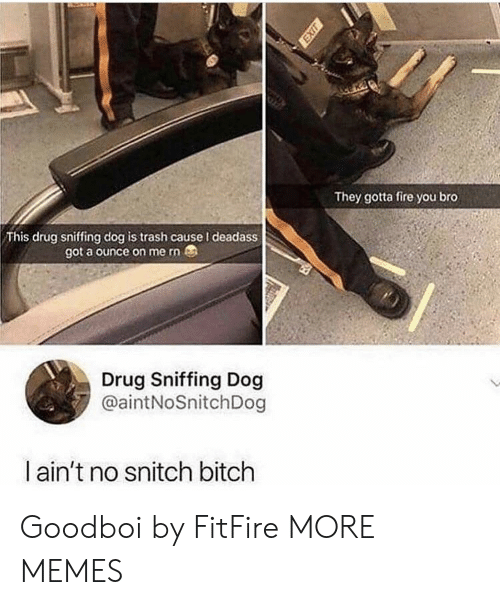 No Snitch: They gotta fire you bro  This drug sniffing dog is trash cause I deadass  got a ounce on me rn  Drug Sniffing Dog  @aintNoSnitchDog  ain't no snitch bitch Goodboi by FitFire MORE MEMES