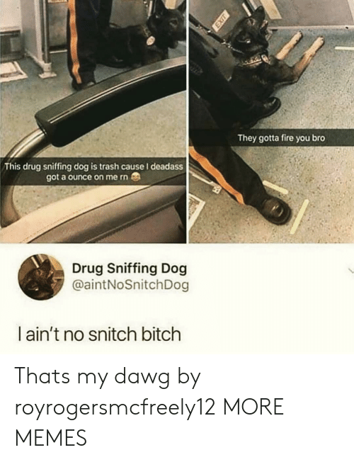 No Snitch: They gotta fire you bro  This drug sniffing dog is trash cause I deadass  got a ounce on me rn  Drug Sniffing Dog  @aintNoSnitchDog  l ain't no snitch bitch Thats my dawg by royrogersmcfreely12 MORE MEMES