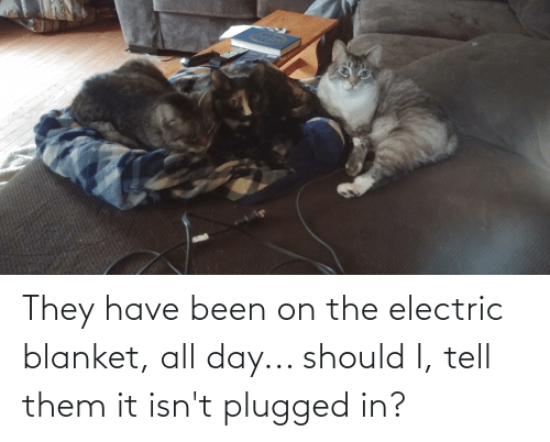 Been: They have been on the electric blanket, all day... should I, tell them it isn't plugged in?