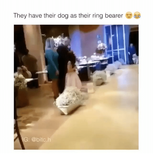 bearer: They have their dog as their ring bearer  IG @bitc.h