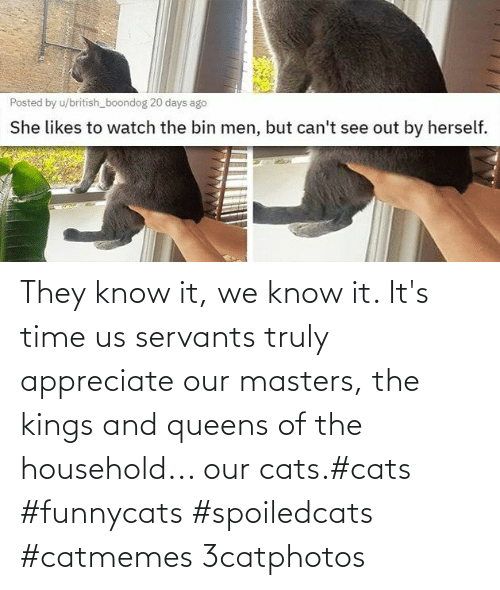 Household: They know it, we know it. It's time us servants truly appreciate our masters, the kings and queens of the household... our cats.#cats #funnycats #spoiledcats #catmemes 3catphotos