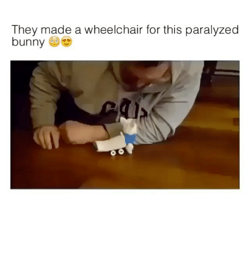 Paralyzation: They made a wheelchair for this paralyzed  bunny