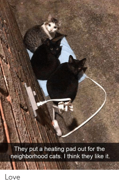 the neighborhood: They put a heating pad out for the  neighborhood cats. I think they like it. Love