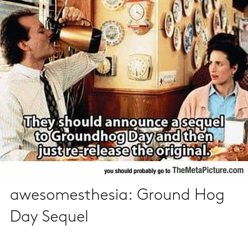 Tumblr, Blog, and Com: They should announce a sequel  to Groundhog Dayand then  just re releasetheoriginal  you should probably go to TheMetaPicture.com awesomesthesia:  Ground Hog Day Sequel