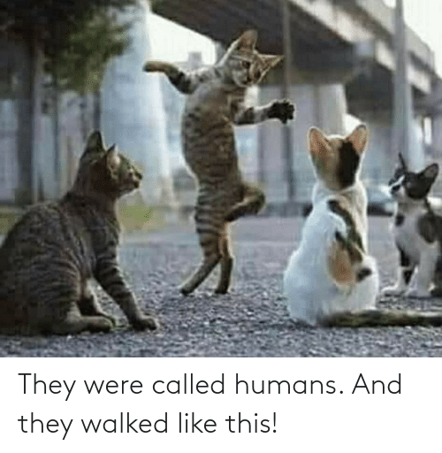 called: They were called humans. And they walked like this!