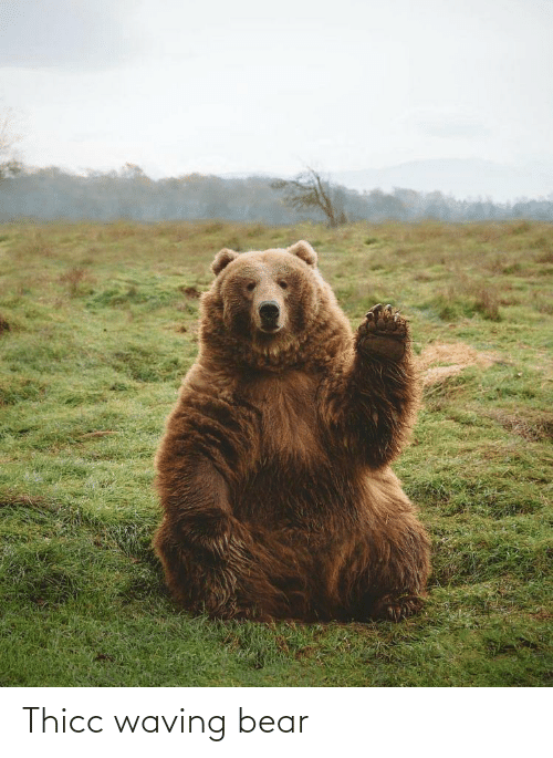 waving: Thicc waving bear