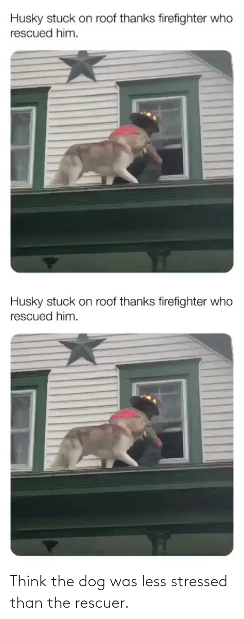 Dog: Think the dog was less stressed than the rescuer.
