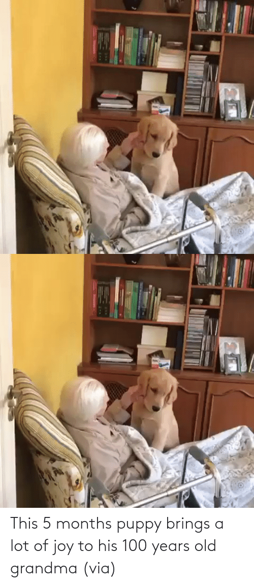 years: This 5 months puppy brings a lot of joy to his 100 years old grandma (via)