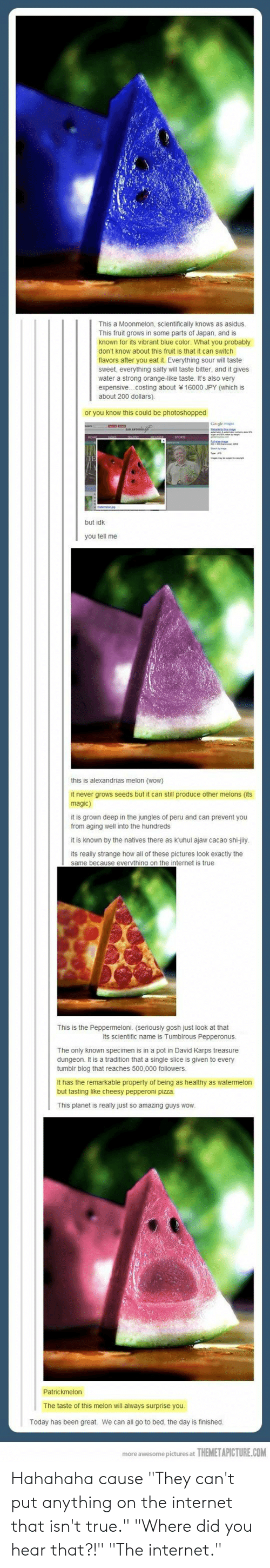 "Internet, Pizza, and Being Salty: This a Moonmelon, scientifically knows as asidus  This fruit grows in some parts of Japan, and is  known for its vibrant blue color. What you probably  don't know about this fruit is that it can switch  flavors after you eat it. Everything sour will taste  sweet, everything salty will taste bitter, and it gives  water a strong orange-like taste. It's also very  expensive...costing about 16000 JPY (which is  about 200 dollars)  or you know this could be photoshopped  but idk  you tell me  this is alexandrias melon (wow)  it never grows seeds but it can still produce other melons (its  magic)  it is grown deep in the jungles of peru and can prevent you  from aging well into the hundreds  it is known by the natives there as kuhul ajaw cacao shi-jily  its really strange how all of these pictures look exactly the  same because evervthing on the internet is true  This is the Peppermeloni. (seriously gosh just look at that  Its scientific name is Tumblrous Pepperonus  The only known specimen is in a pot in David Karps treasure  dungeon. It is a tradition that a single slice is given to every  tumbir blog that reaches 500,000 followers  It has the remarkable property of being as healthy as watermelon  but tasting like cheesy pepperoni pizza  This planet is really just so amazing guys wow  The taste of this melon wil always surprise you  Today has been great  We can all go to bed, the day is finished  more awesome pictures at  THEMETAPICTURE.COM Hahahaha cause ""They can't put anything on the internet that isn't true."" ""Where did you hear that?!"" ""The internet."""