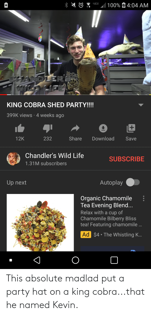 Party, Cobra, and King: This absolute madlad put a party hat on a king cobra...that he named Kevin.