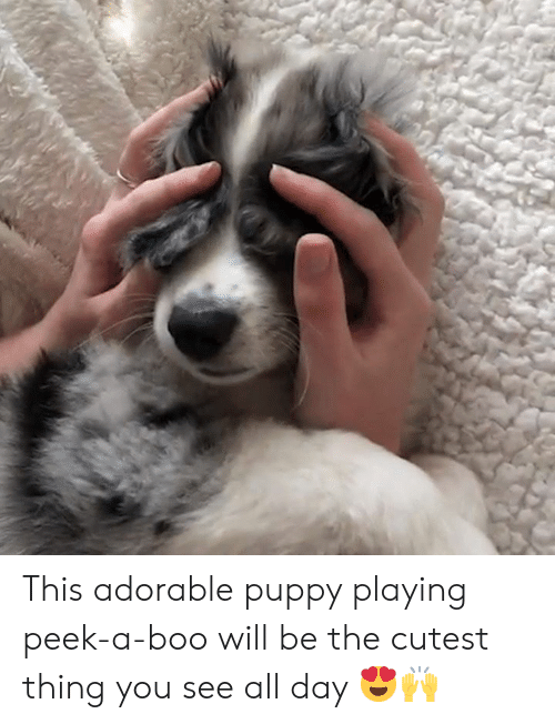 See All: This adorable puppy playing peek-a-boo will be the cutest thing you see all day 😍🙌