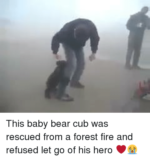 Memes, Cubs, and 🤖: This baby bear cub was rescued from a forest fire and  refused let go of his hero ❤️😭