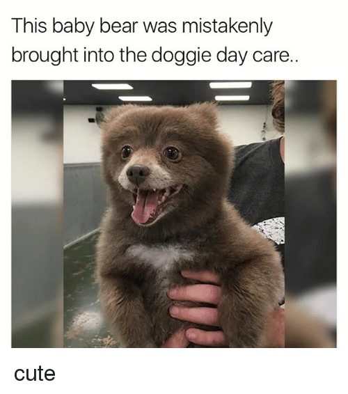 Cute, Bear, and Baby: This baby bear was mistakenly  brought into the doggie day care.. cute