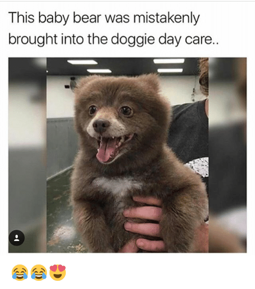 Memes, Bear, and Baby: This baby bear was mistakenly  brought into the doggie day care. 😂😂😍
